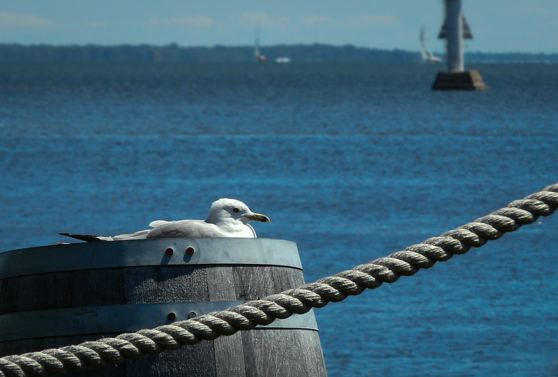 What a life for a seagull -- outside a restaurant in Brighton, Ontario.