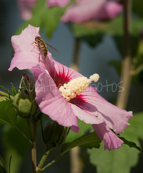 Thank you Miss Rose of Sharon.