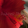 The hibiscus up close and personal.