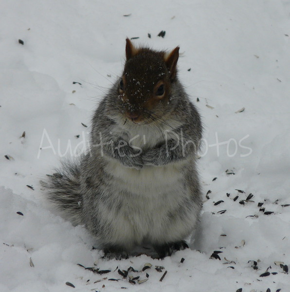 You can beg if you like--it won't get you back to the feeder.  Not unless you learn to jump REALLY high.  :-)