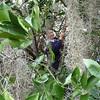 Ruby in the orange tree