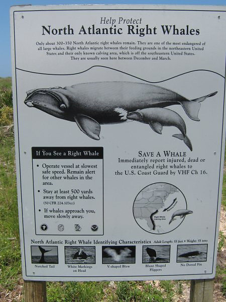 the rocks, whale sign <br /> Washington Oaks Picnic <br /> May 22 2010