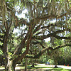gift shop trees <br /> Washington Oaks Picnic <br /> May 22 2010