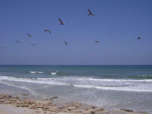 the rocks, pelicans 3 <br /> Washington Oaks Picnic <br /> May 22 2010