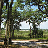 picnic, view looking west from pavillion <br /> Washington Oaks Picnic <br /> May 22 2010