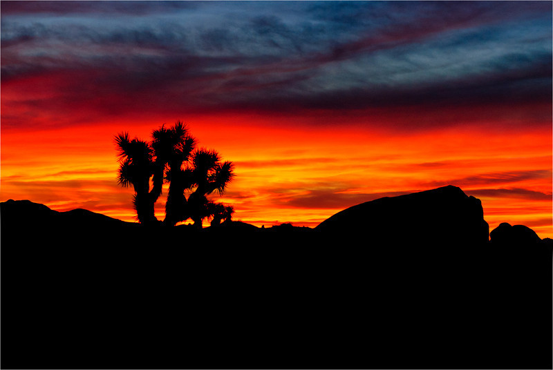 "Sunrise, ""Joshua Tree"""