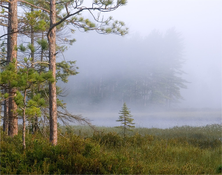 Fog in the Bog