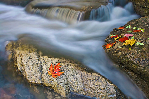 leaves by a stream final