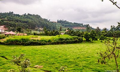 Between Lake Mburo & Bwindi