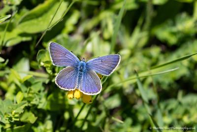 Mazerine Blue