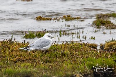 Loch Fleet, Sutherland