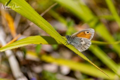 Small Heath