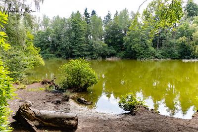 NT Comer Woods