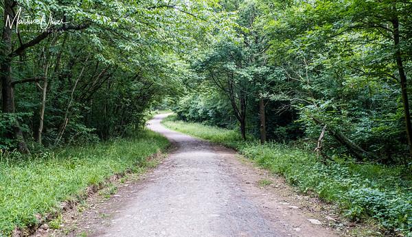 Oversley Woods WWT