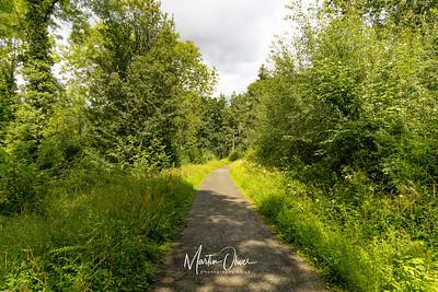 WWT Tiddesley Wood,