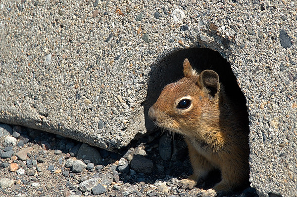 Squirrel #2