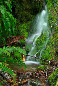 Rushing Creek #4