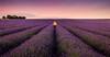 Lavender Lane II Hitchin, UK