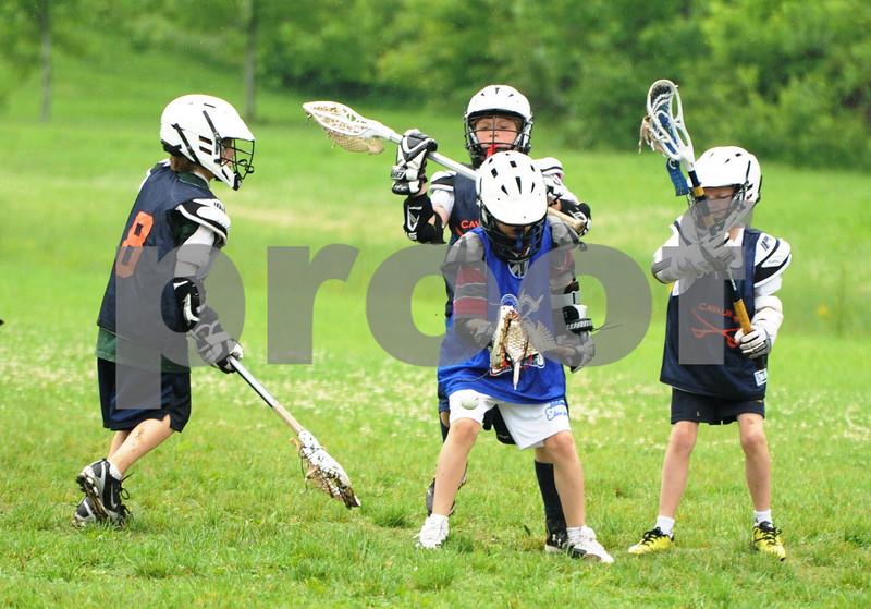 Little lacrosse1 213