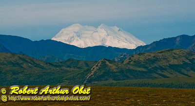 Beautiful grasslands and rugged foothills encircle Denali or Mount McKinley within Denali National Park (USA Alaska Denali Park)