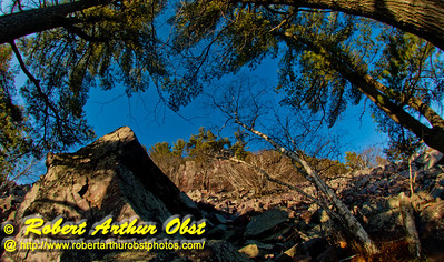 Hiker's view during springtime with evening light from Balanced Rock Trail of vibrant blue skies and pines framing radiant boulder slopes within Devils Lake State Park (USA WI Baraboo; Obst FAV Photos 2013 Nikon D800 Daily Best Obst Image 8843)