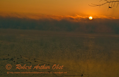 Ducks cruising through mist and fog during an orange sunrise over Lake Mendota by Governor Nelson State Park (USA WI Waunakee)