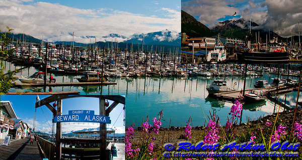 Fireweed and snowy Kenai mountains and blue skies frame beautiful Seward Harbor and its boats on Resurrection Bay within Seward and the Kenai Peninsula (USA Alaska Seward)