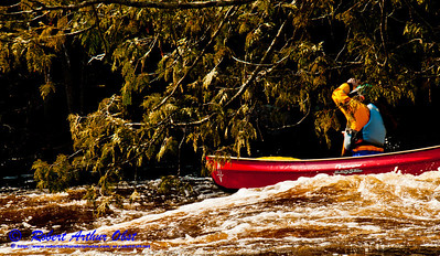 Open canoe solo woman riding huge waves under a tight intimate ceiling of cedar branches wihin Gilmores Mistake Rapids at 1400 CFS on Section 3 of the wild Wolf River within Langlade County (USA WI White Lake; Obst FAV Photos 2013 Nikon D300s Sports Fun Extraordinaire Image 5275)