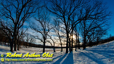 Cross country skiers view of evening sun under clear skies over majestic oaks or Quercus within Owen Conservation Park (USA WI Madison; Obst FAV Photos 2013 Nikon D800 Image 7407)