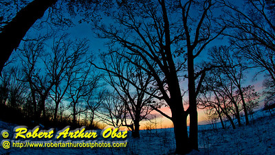 Cross country skier's view of intricate branches of an Oak or Quercus woods during winter evening sunset within Governor Nelson State Park (USA WI Middleton; Obst FAV Photos 2013 Nikon D800 Image 7393)