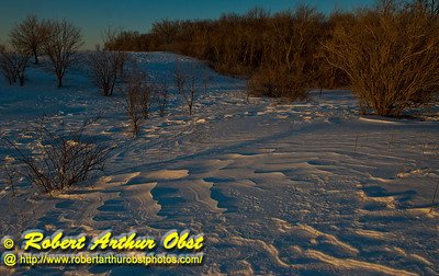 Cross country skier's view from the Woodland Trail of the late afternoon sun highlighting wind rippled snow fields a radiant oak forest within Governor Nelson State Park (USA WI Waunakee; Obst FAV Photos 2013 Nikon D800 Daily Best Obst Image 8343)