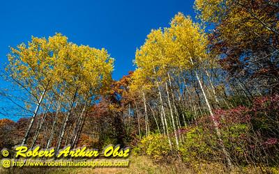 Obst FAV Photos Nikon D800 Daily Best Obst Image 4365