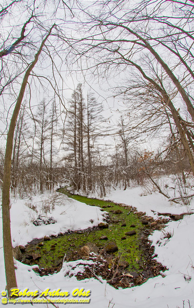 Cross country skier's winter view after fresh snowfall of a serpentine emerald tributary of Lake Wingra near Big Spring within the University of Wisconsin Madison Arboretum (USA WI Madison; Obst FAV Photos 2013 Daily Best Obst Nikon D800 Image 7904)