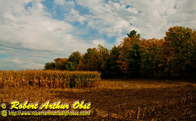 Gorgeous nearly autumn woods and moody clouds and cornfield harvest near the Wolf River Refuge (USA WI White Lake; Obst FAV Photos 2012 Nikon D300s Image 3217)