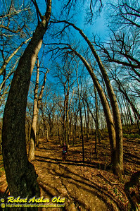 Spring hardwoods under cerulean skies crown the trails and hikers at Indian Lake County Park (USA WI Cross Plains)