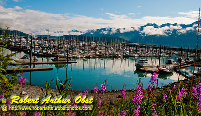 Fireweed and snowy Kenai mountains and blue skies frame beautiful Seward Harbor and its boat harbor on Resurrection Bay within Seward and the Kenai Peninsula (USA Alaska Seward)
