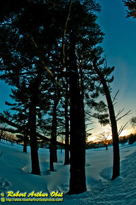 Orange sunset afterglow over pines and snow covered Bishops Bay Country Club golf course after a blizzard (USA WI Middleton; Obst Photos 2011 Nikon D300 Image 9228)
