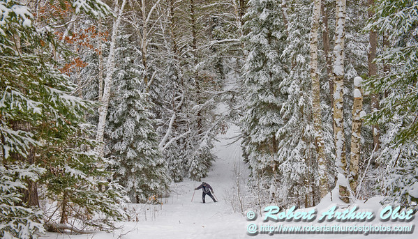 A winter wonderful surrounds a cross country skier as he ascends a steep section of the North Loop Trail between Fanny Lake and Sawyer Lake Road Access within the Jones Springs Management Area of the Nicolet National Forest (USA WI Townsend; Obst FAV Photos 2013 Nikon D800 Daily Best Obst Image 7651)