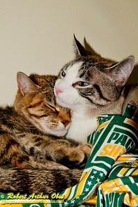 Cats or Felis catus in love necking in my closet Autumn Breeze Obst and Winter Frost Obst (USA WI Middleton; RAO 2012 Nikon D300s Image 1193);