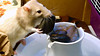 """He balances the rock just right. If you're viewing this photo in the keyword page, view the video on <a href=""""http://www.joinrats.com/Enrichment/Fountains/"""">http://www.joinrats.com/Enrichment/Fountains/</a>."""