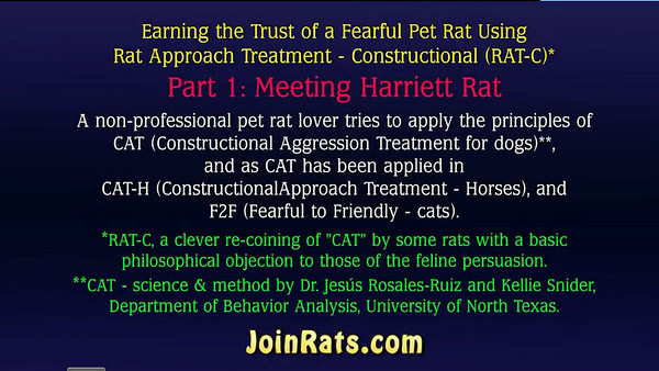 Session 1, Part 1: Preliminary to trying RAT-C (CAT). Observing Harriett and offering treats. Whether a rat will take a treat from a human, and how she interacts with the treat and fingers, can often say a lot about the fear state of a rat.