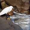 Egret.