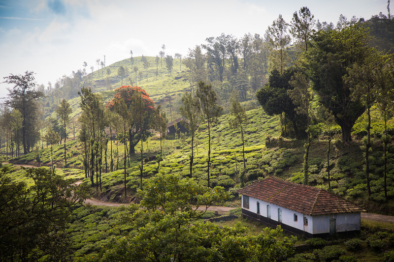 On the way to Chembra Peak, Wayanad´s highest mountain.