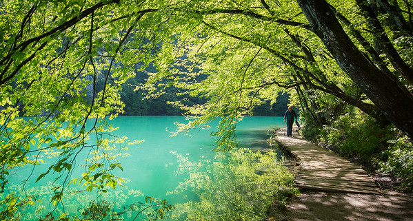 Plitvice National Park, Croatia - hanging trees