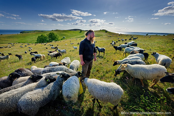 LES ILES DE RUGEN & USEDOM EN ALLEMAGNE. Ile de Rugen près du village de Gager. Frank Vestphal élève sur les terres de ses ancêtres des moutons poméraniens. La laine tondue est destinée à Nordwolle, une marque de vêtements en laine.