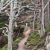 Cypress Grove Trail