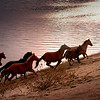 horses on beach copy
