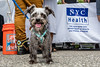 Pet Photography of Shelter Animals Needing Homes in New York City