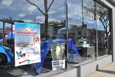 2015-10-11 - Adoptapalooza Long Island City