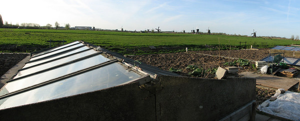 Allotment, Alblasserdam - In the background the Mill Network at Kinderdijk, a world heritage site